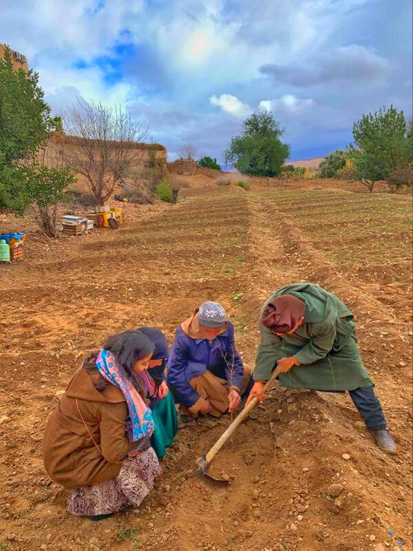 LET'S PLANT POMEGRANATE TREES IN PARTNERSHIP WITH AL ELEFA CHEESE OF LALLA TAKERKOUST COOPERATIVE IN LALLA TAKERKOUST