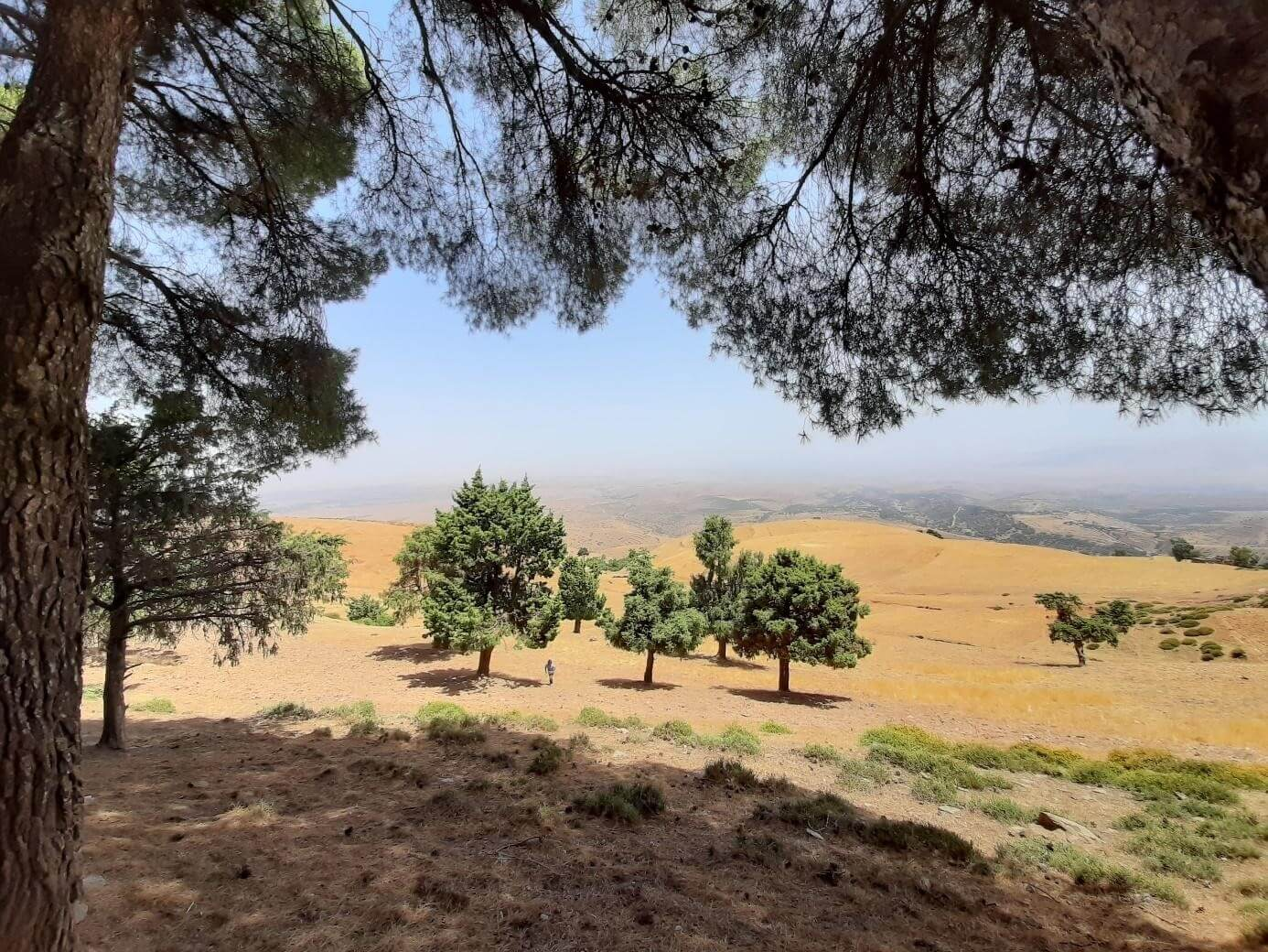 MONITORING TREES IN AMIZMIZ: ANOTHER WAY TO DISCOVER MOROCCAN NATURE AND HISTORY