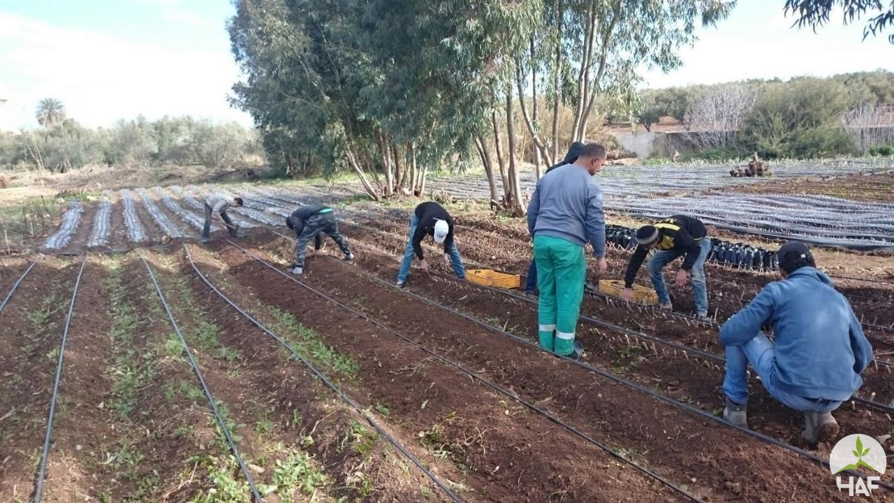 HAF'S FRUIT TREE NURSERIES VISION: FES PROVINCE